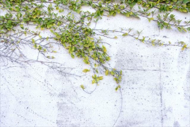 夏でも涼しく!壁面緑化で快適な暮らしを実現させよう!